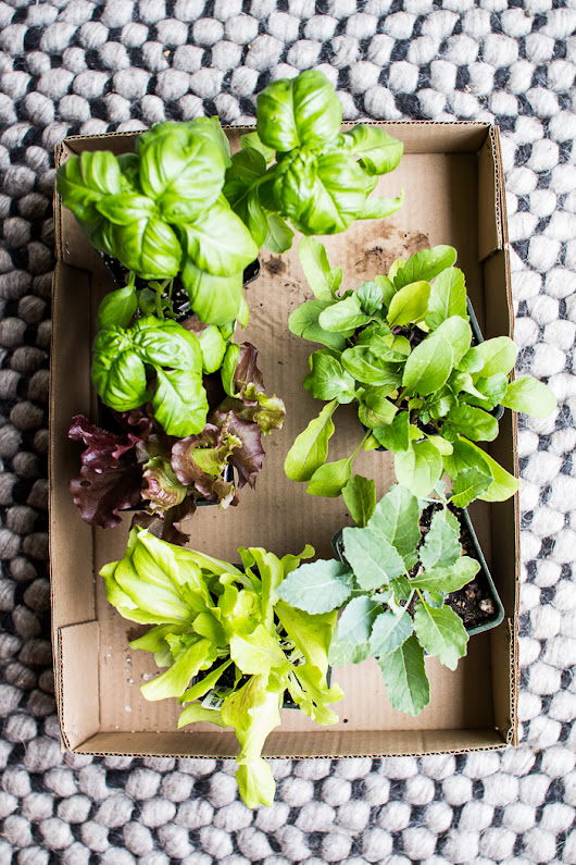 How to Plant a Small Space Lettuce Garden