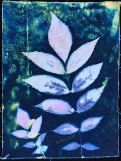 Wet Cyanotype_Sue Reno_Image 134