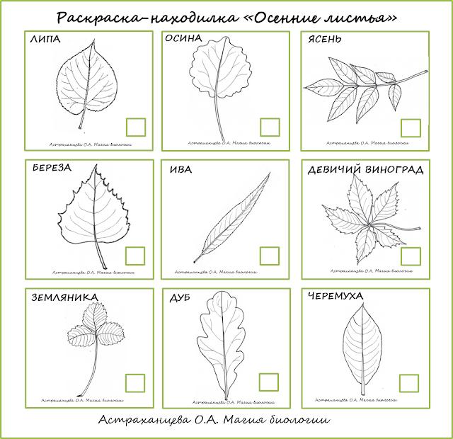 осенние-находилки-листья