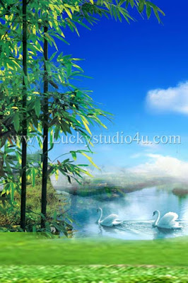 Studio Background 8x12