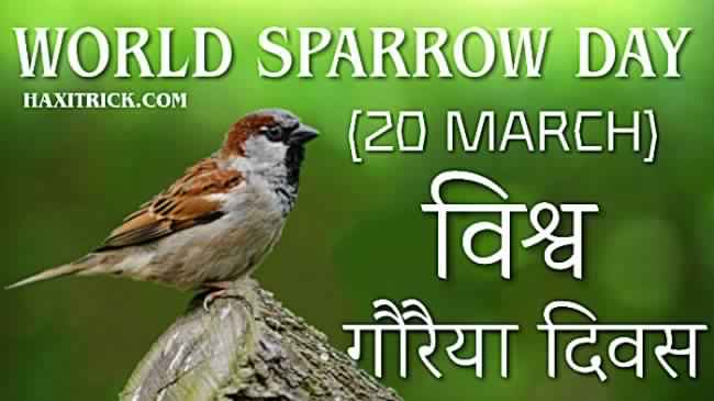 World Sparrow Day 20 March 2020 Vishwa Gauraiya Diwas in Hindi
