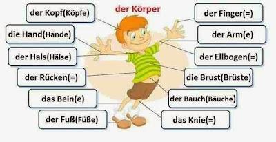 Niemiecki w opiece - Körperteile