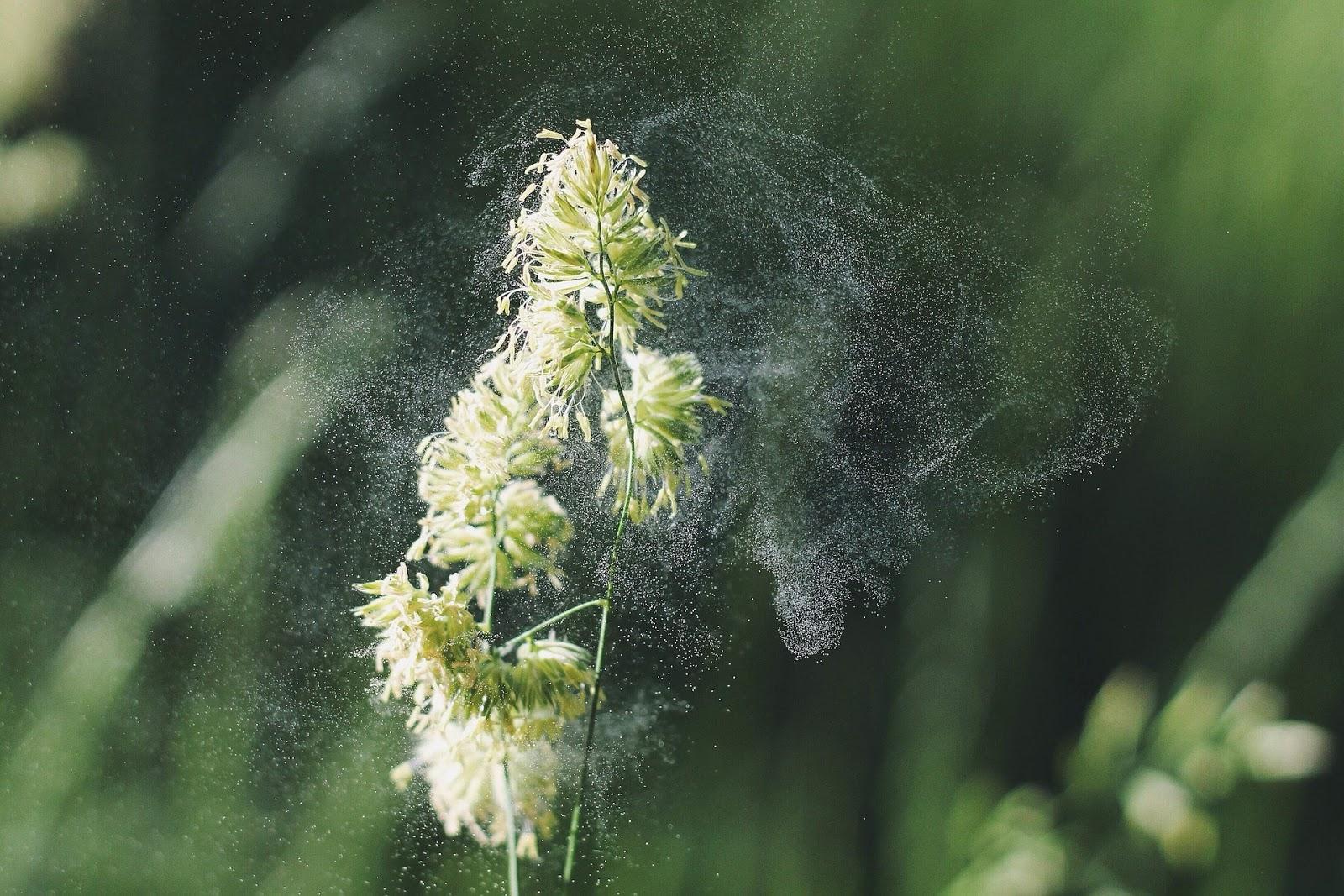 alergia al polen · www.conlosochosentidos.es