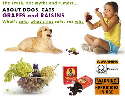 Dogs, Cats, Grapes (and Raisins) – What's Safe, Not Safe, Cautions, Treatment
