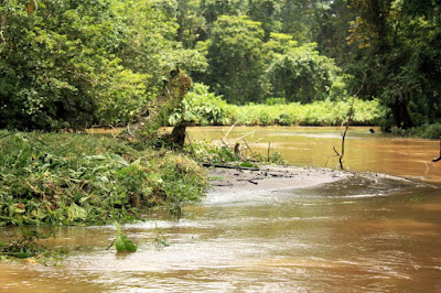 Canal de Tortuguero