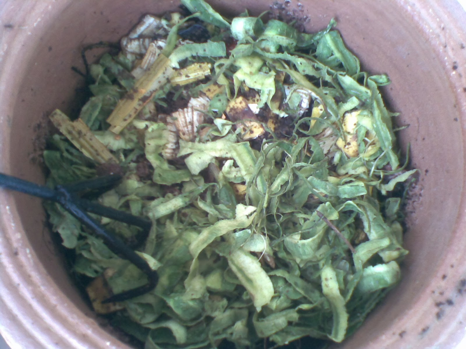 Kitchen Waste in Pot