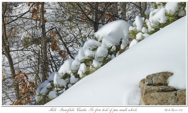 Fells: Snowflake Castles. In firm hold of pine needle whorls.