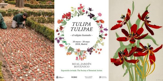 0tulipa tulipae tulipan ilustrado RJB CSIC elblogdelatabla 900 px Exposición 'Tulipa,...