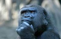 maymun mu goril mi