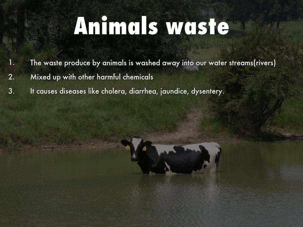 Air And Water Pollution Impact Of Animal Farming On The