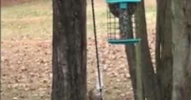 anti squirrel slinky on bird feeder it really works best squirrel proof bird feeders. Black Bedroom Furniture Sets. Home Design Ideas