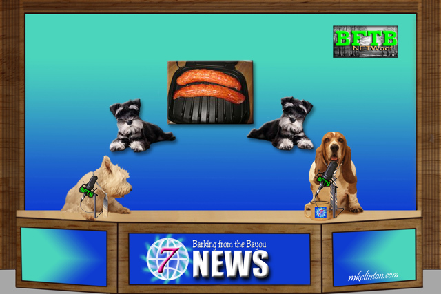BFTB NETWoof News report on Schnauzers return to the smell of sausage after being lost