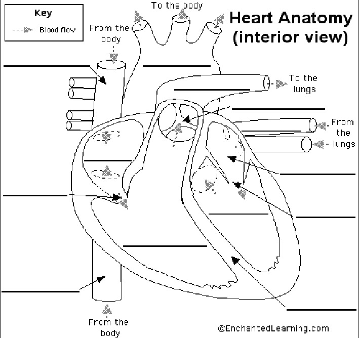 virtual magazine: heart diagram with labels