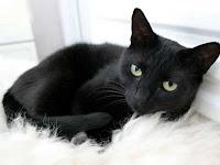 Mitos Kucing Hitam di Berbagai di 8 Negara