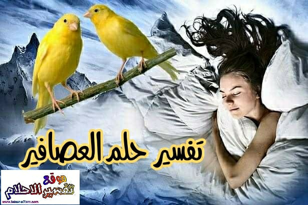 تفسير رؤية العصافير أو الطيور في الحلم