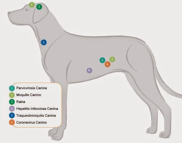 Clinica veterinaria burjassot 961131539 centro for Pececillo nuevo de cualquier especie