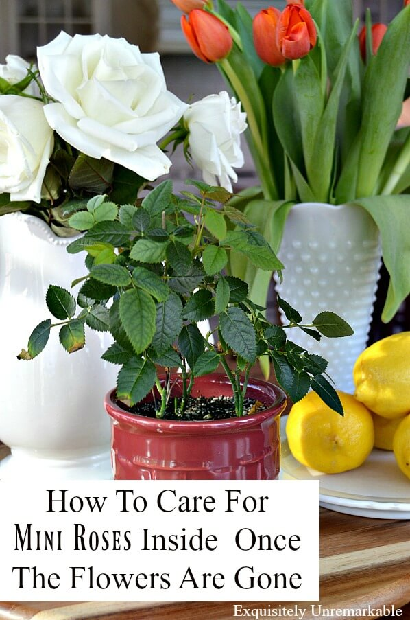 How To Care For Mini Roses Inside Once The Flowers Are Gone text overlay on picture of rose bush and lemons and flowers centerpiece