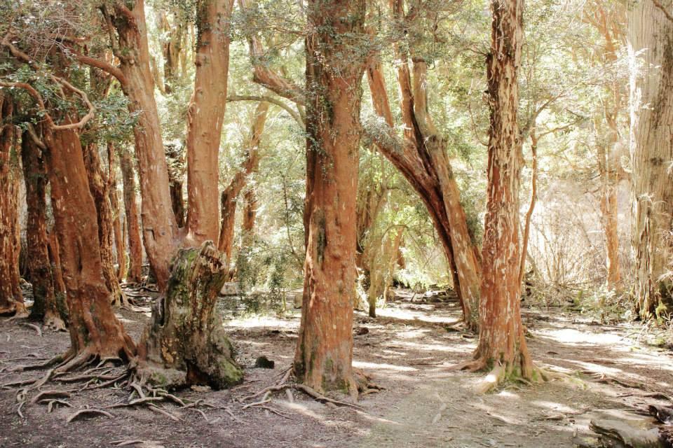 sendero de arrayanes