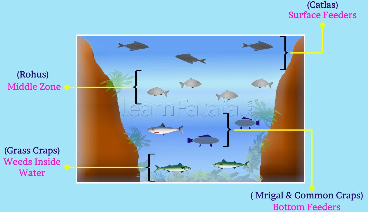 TRADITIONAL FARMING ~ FISH FARMING - RECIRCULATING