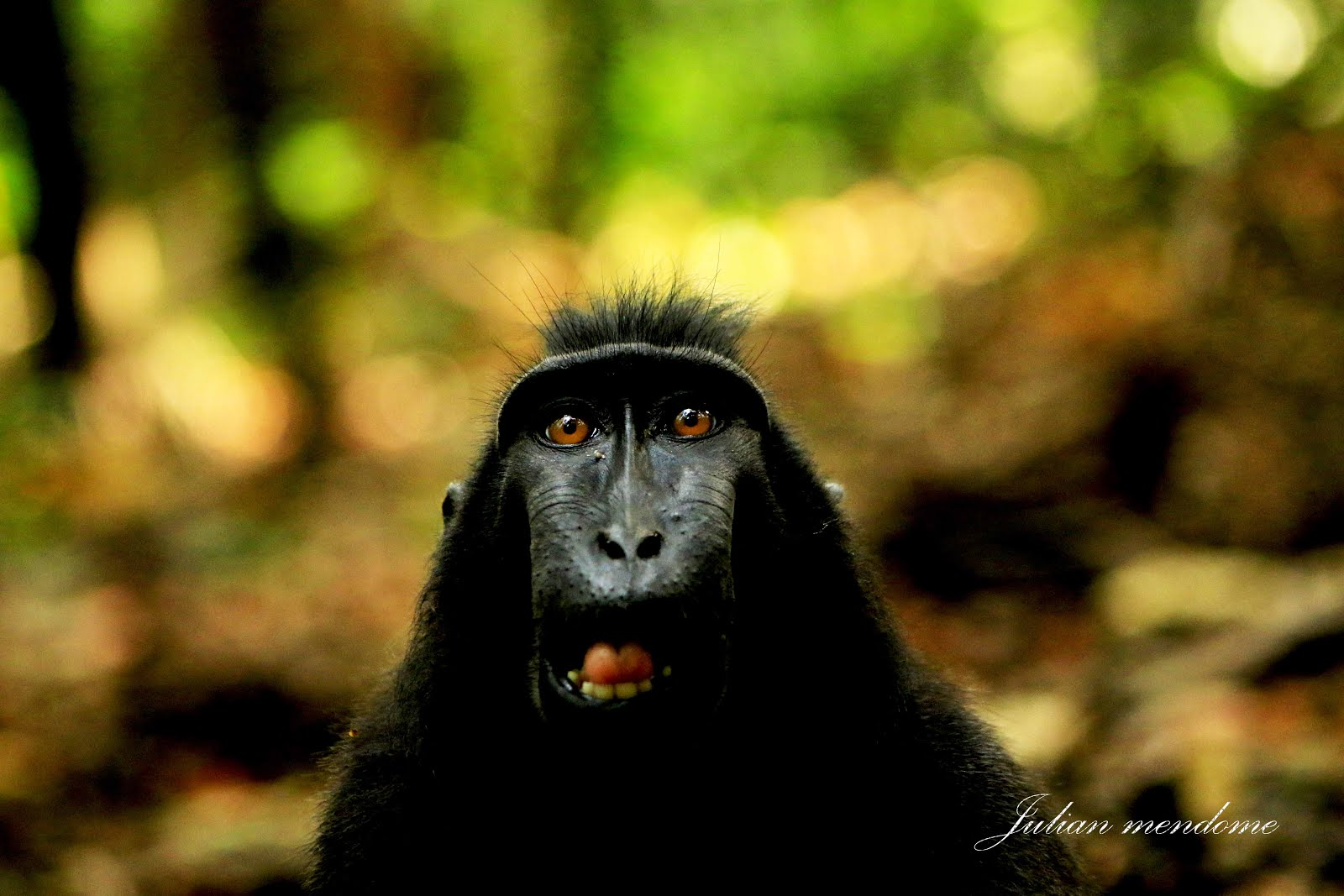 Tangkoko wildlife-tour
