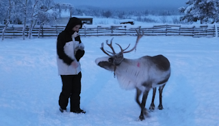 Arctic road trip journey - winter holiday in sweden - reindeer