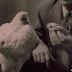 गजब... सिर कटने के बाद भी 18 महीने जिंदा रहा था ये मुर्गा