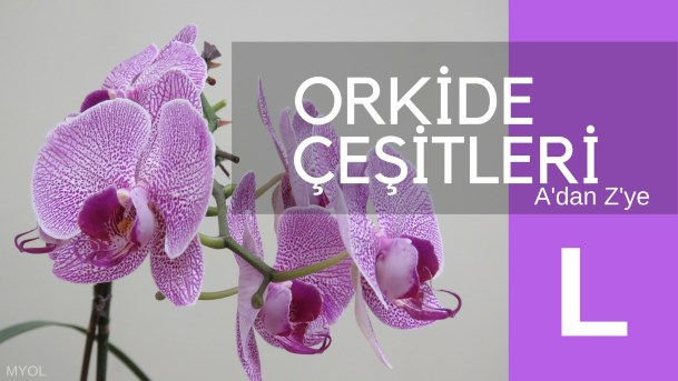 Orkide Çeşitleri L Harfi