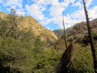 View north on Fish Canyon Trail in autumn, Angeles National Forest