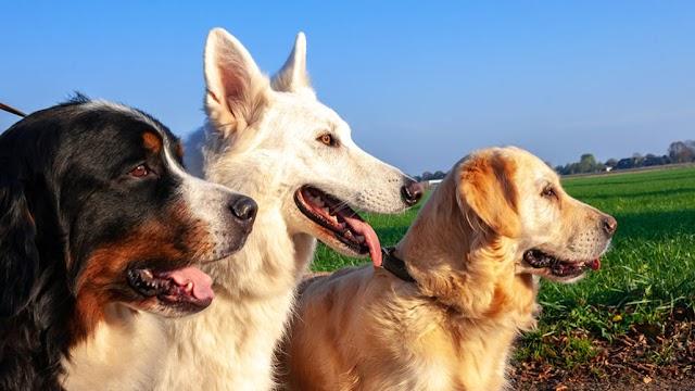 Kulağa Hoş Gelen Köpek isimleri - En iyi 500 Erkek Köpek İsimleri