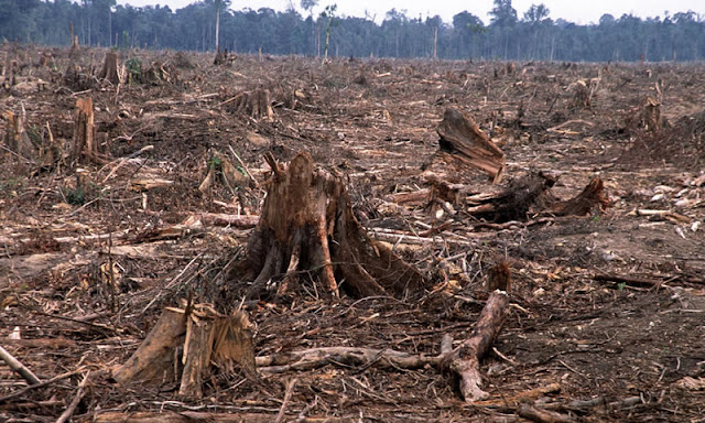 Congo Basin – 25 Years Left