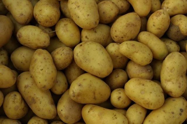اهم طرق زراعة البطاطس 0