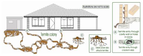 Termite Total Pest Control
