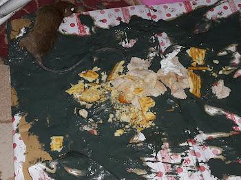 Cara Terbaik Halau Tikus