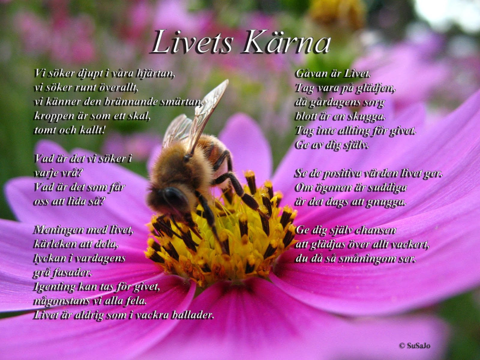 1 år tillsammans dikt Susens tankar: Susens Dikter 1: Livets Kärna 1 år tillsammans dikt