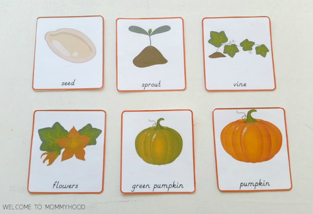 picture about Pumpkin Life Cycle Printable known as Pumpkin existence cycle printables for arms upon Thanksgiving