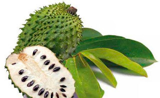 Daun sirsak, manfaat daun sirsak untuk kecantikan, cara mengkonsumsi daun sirsak, manfaat buah sirsak untuk kesehatan, khasiat daun sirsak terbaru, daun sirsak obat kanker, manfaat daun sirsak untuk kolesterol, cara merebus daun sirsak, efek samping daun sirsak