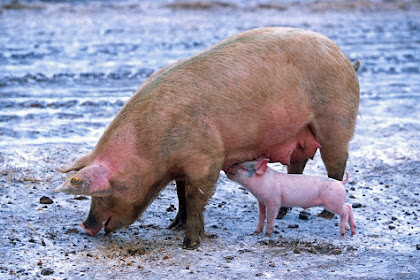 Beberapa Produk yang Mengandung Babi Tersebar di Media Sosial, Hoax atau Fakta?