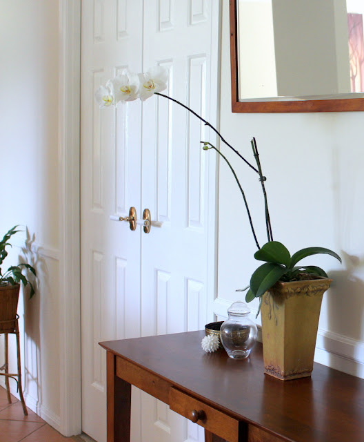 White (Phalaenopsis) moth orchid on ahall table