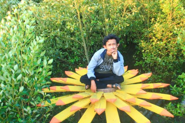 Lo percaya kalo bunga matahari itu isinya ga cuma kuaci ga? - Catatan Nizwar ID