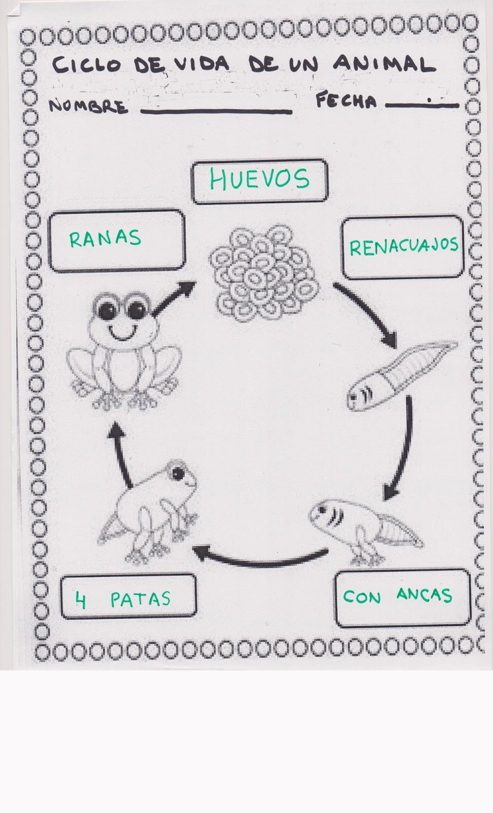 Lujo Hojas De Trabajo De Rana Inspiración - hoja de cálculo ...