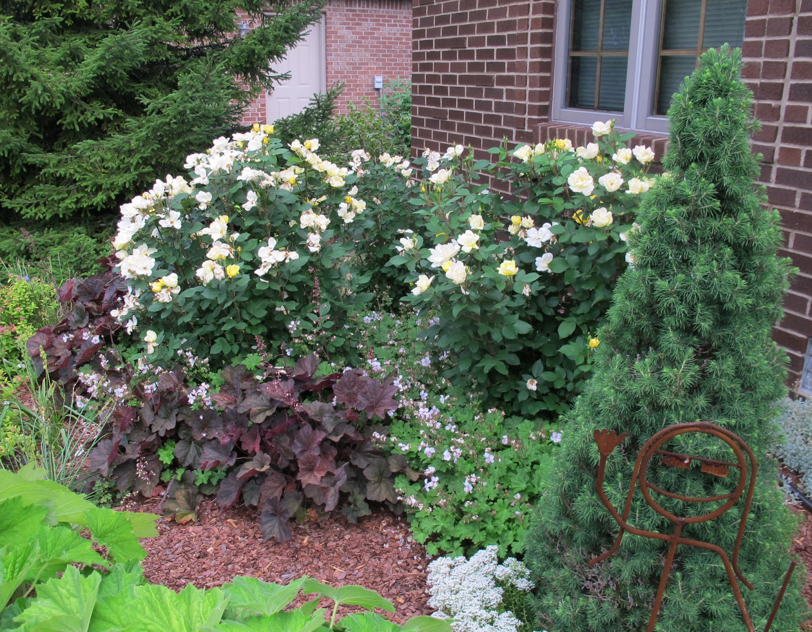 List Of Synonyms And Antonyms Of The Word Knockout Rose Garden Ideas