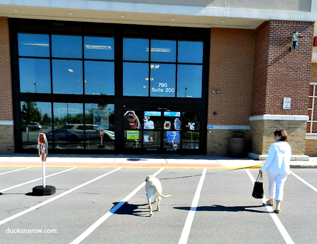 PetSmart, Purina Pro Plan Savor Dry Dog Food