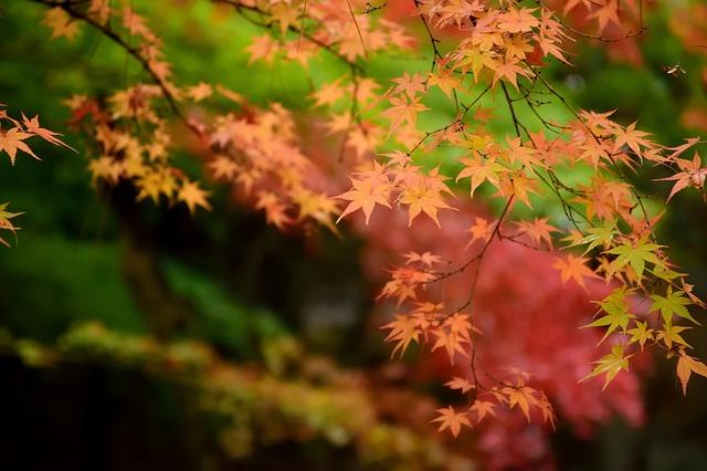 ảnh lá mùa thu đẹp