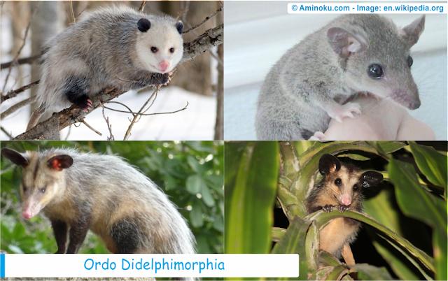 Daftar spesies hewan didelphimorphia