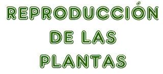 http://capitaneducacion.blogspot.com.es/2017/11/3-primaria-ciencias-de-la-naturaleza_54.html
