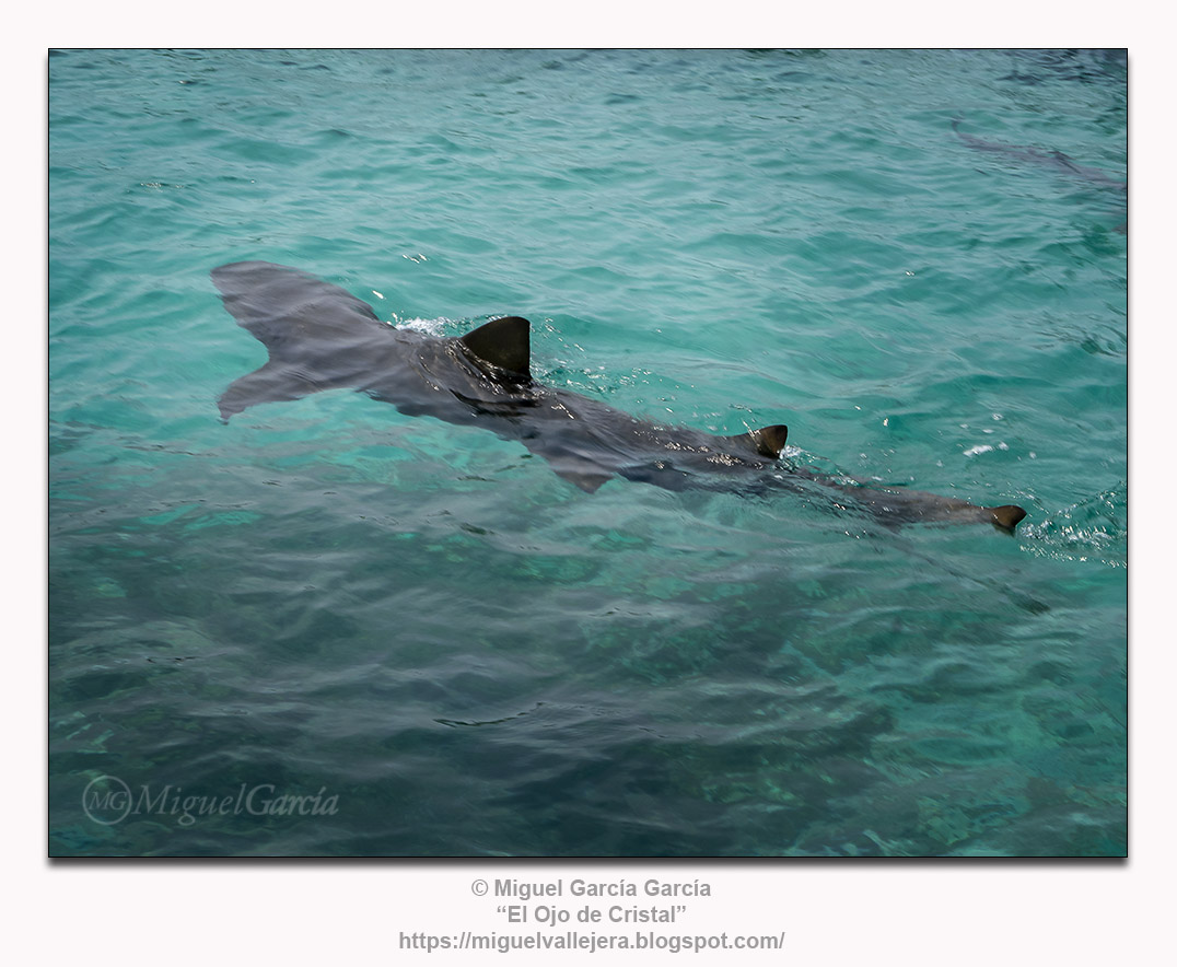 Caribe colombiano: Tiburones.