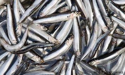 10 Ikan Konsumsi Air Laut yang banyak di Konsumsi Manusia