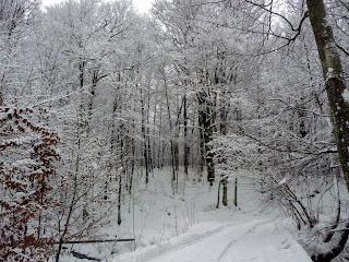 Синяк. Ліс