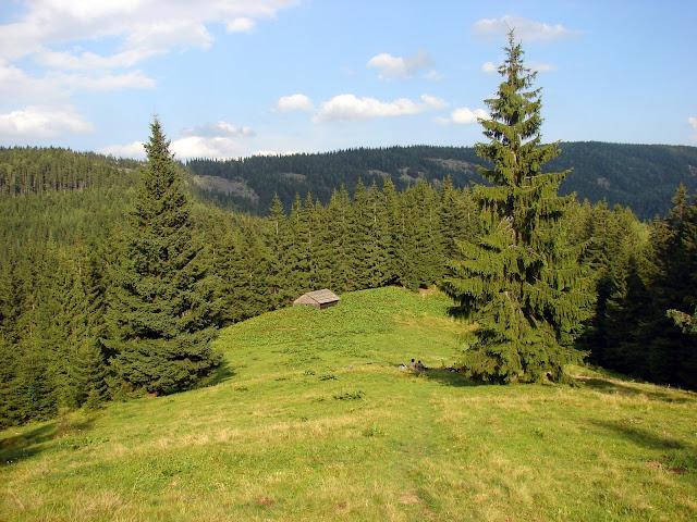 Полонина на склоне горы Рипна