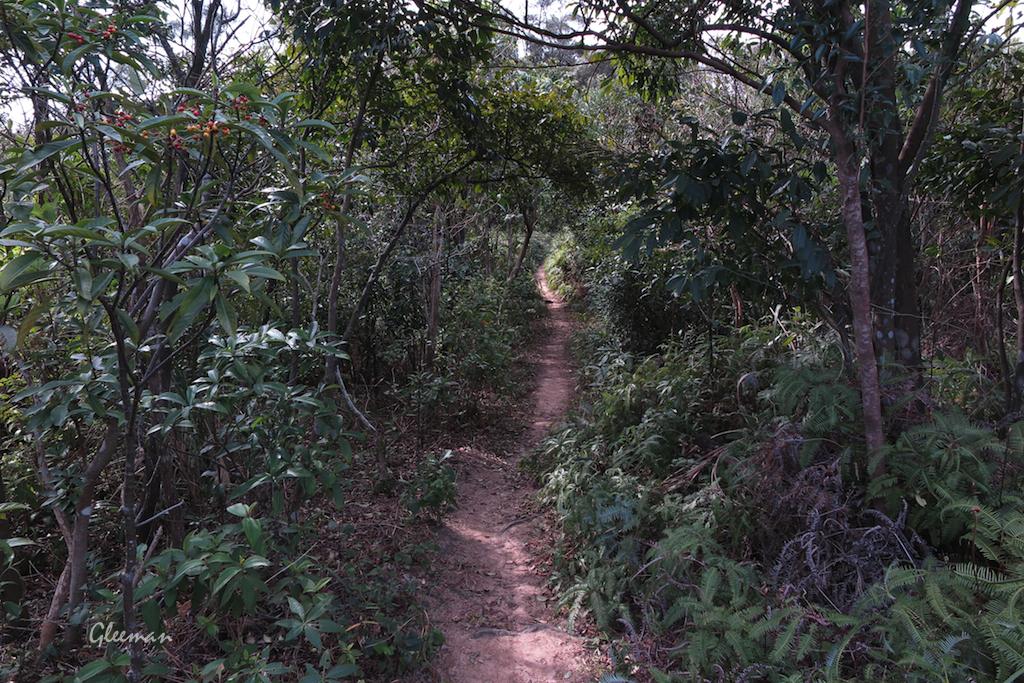 沿著山稜線的林間小路前進。